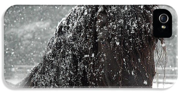 Black Snow iPhone 5 Cases - Friesian Snow iPhone 5 Case by Fran J Scott