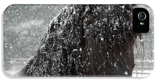 Horse iPhone 5 Cases - Friesian Snow iPhone 5 Case by Fran J Scott
