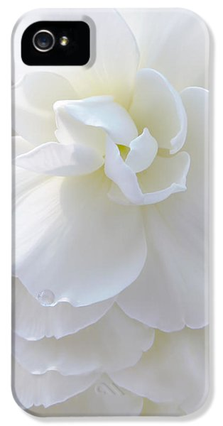 Ivory Flower iPhone 5 Cases - Frilly Ivory Begonia Flower iPhone 5 Case by Jennie Marie Schell