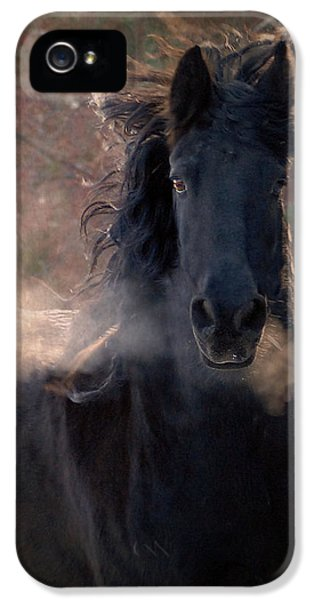 Horse iPhone 5 Cases - Frost iPhone 5 Case by Fran J Scott