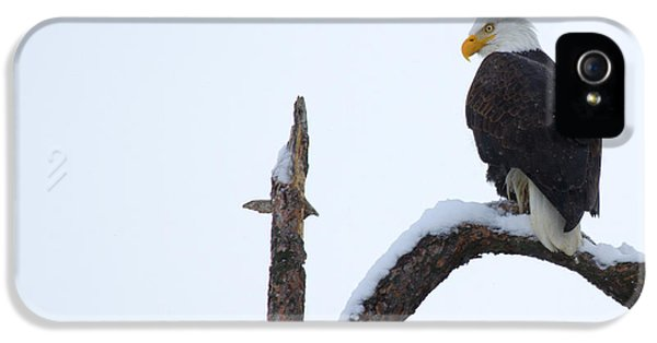 American Bald Eagle iPhone 5 Cases - Frozen Perch iPhone 5 Case by Mike  Dawson