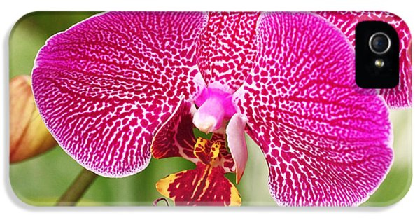 Fuchsia Moth Orchid IPhone 5 / 5s Case by Rona Black