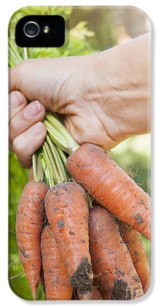 Carrot iPhone 5 Cases - Garden carrots iPhone 5 Case by Elena Elisseeva