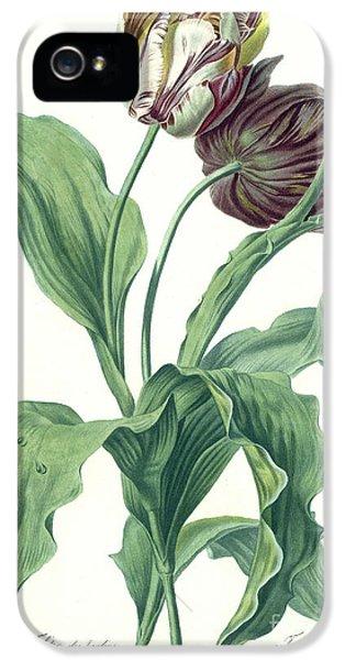 Garden iPhone 5 Cases - Garden Tulip iPhone 5 Case by Gerard van Spaendonck