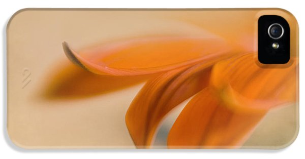 Lensbaby Macro iPhone 5 Cases - Gazania Abstract II iPhone 5 Case by David and Carol Kelly