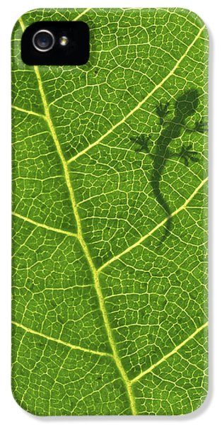 Growth iPhone 5 Cases - Gecko iPhone 5 Case by Aged Pixel