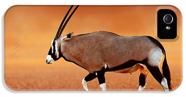 Glowing iPhone 5 Cases - Gemsbok on desert plains at sunset iPhone 5 Case by Johan Swanepoel
