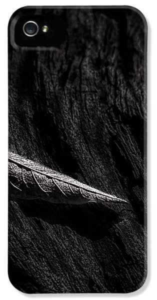 Softly iPhone 5 Cases - Gently Resting iPhone 5 Case by Bob Orsillo