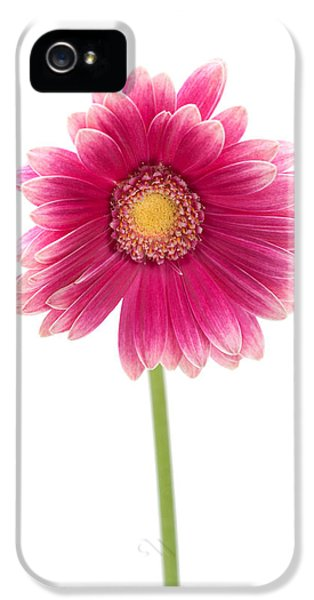 Gerbera IPhone 5 / 5s Case by Sebastian Musial