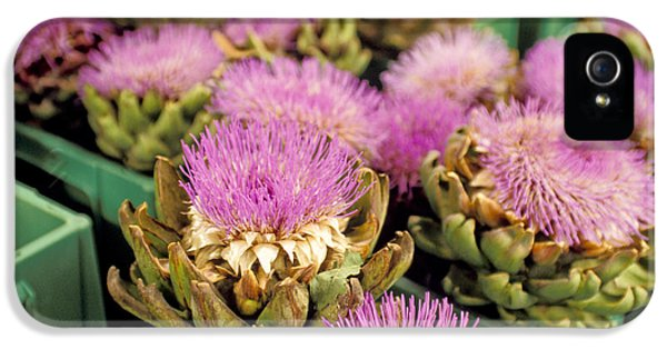 Germany Aachen Munsterplatz Artichoke Flowers IPhone 5 / 5s Case by Anonymous