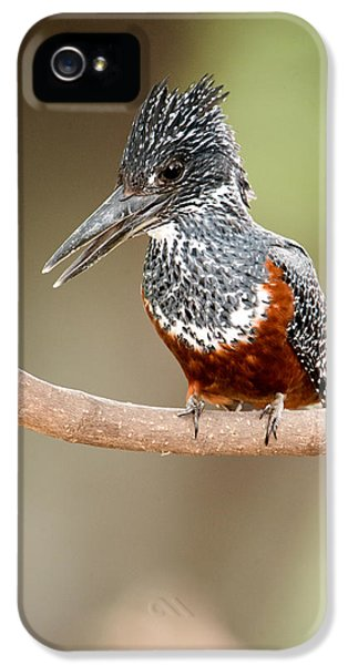 Giant Kingfisher Megaceryle Maxima IPhone 5 / 5s Case by Panoramic Images