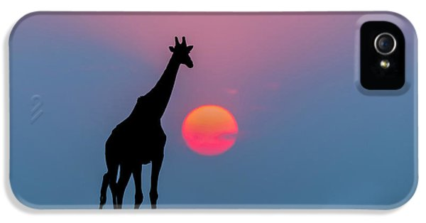 Giraffe At Sunset Chobe Np Botswana IPhone 5 / 5s Case by Andrew Schoeman