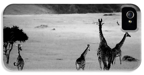 Giraffe In Black And White IPhone 5 / 5s Case by Sebastian Musial