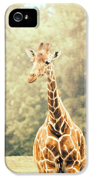 Giraffe In The Rain IPhone 5 / 5s Case by Pati Photography