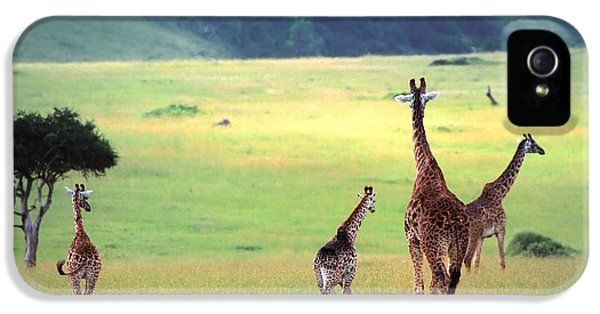 Giraffe IPhone 5 / 5s Case by Sebastian Musial