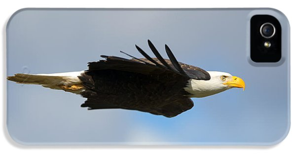 American Bald Eagle iPhone 5 Cases - Glide iPhone 5 Case by Mike Dawson