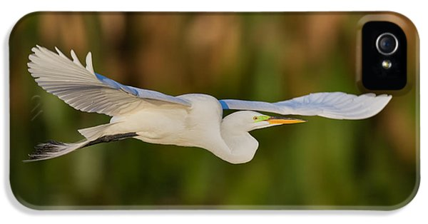 United States iPhone 5 Cases - Gliding Great Egret iPhone 5 Case by Andres Leon
