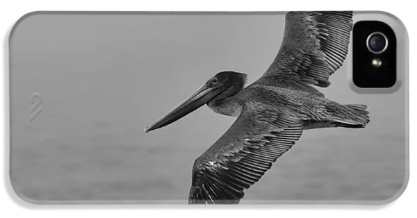 Gliding Pelican In Black And White IPhone 5 / 5s Case by Sebastian Musial