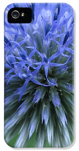 Globe Thistle IPhone 5 / 5s Case by Juergen Roth