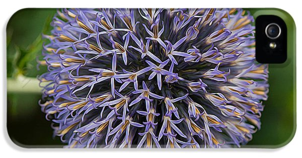 Ritro iPhone 5 Cases - Globe Thistle Flower iPhone 5 Case by Michael Moriarty