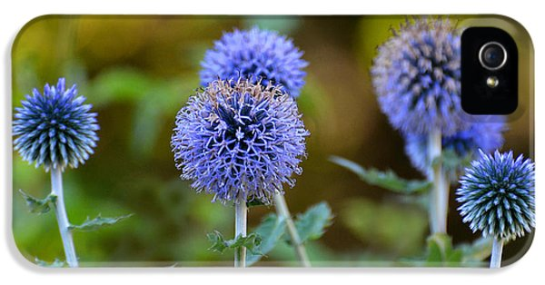 Ritro iPhone 5 Cases - Globe Thistle iPhone 5 Case by Rodney Campbell