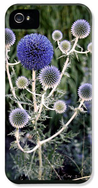 Blooms iPhone 5 Cases - Globe Thistle iPhone 5 Case by Rona Black