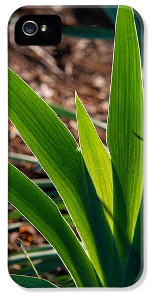 Chlorophyll iPhone 5 Cases - Glowing Iris Leaves 1 iPhone 5 Case by Douglas Barnett