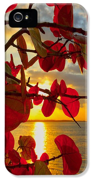 Foliage iPhone 5 Cases - Glowing Red iPhone 5 Case by Stephen Anderson