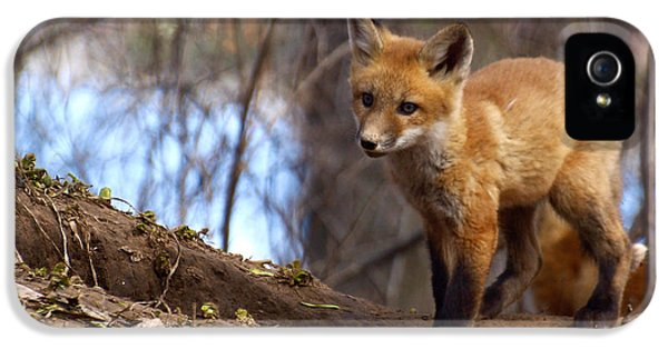 Young Foxes iPhone 5 Cases - Going To The Den  iPhone 5 Case by Thomas Young