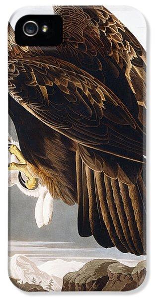 Eagle iPhone 5 Cases - Golden Eagle iPhone 5 Case by John James Audubon