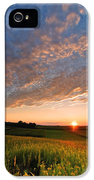 Nirvana iPhone 5 Cases - Golden fields iPhone 5 Case by Davorin Mance