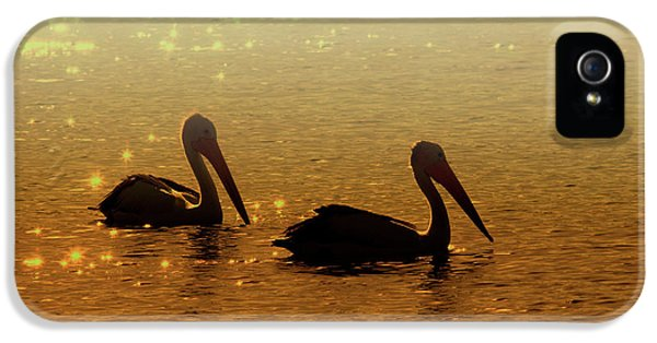 Avian iPhone 5 Cases - Golden Morning iPhone 5 Case by Mike  Dawson