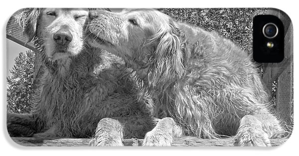 Gray iPhone 5 Cases - Golden Retrievers the Kiss Black and White iPhone 5 Case by Jennie Marie Schell