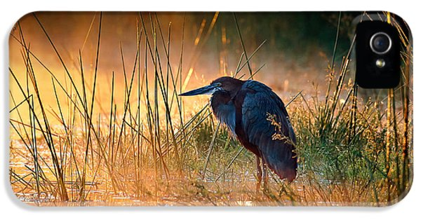 Backlight iPhone 5 Cases - Goliath heron with sunrise over misty river iPhone 5 Case by Johan Swanepoel
