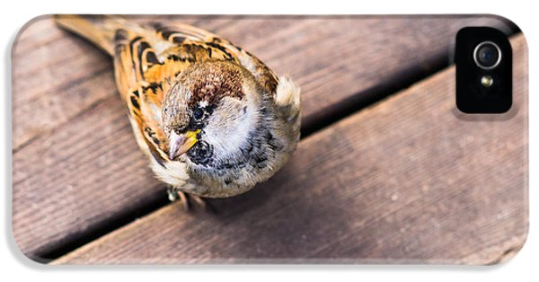 Passer Domesticus iPhone 5 Cases - Got Any Grain? iPhone 5 Case by Alexander Senin
