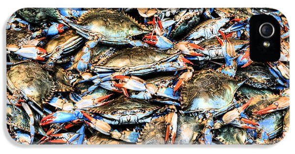 Blue Crab iPhone 5 Cases - Got Crabs iPhone 5 Case by JC Findley