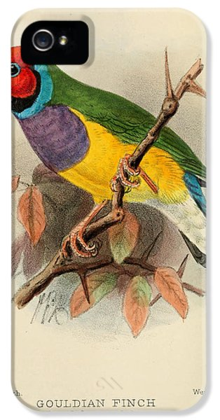Gouldian Finch IPhone 5 / 5s Case by J G Keulemans