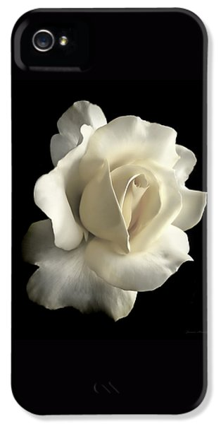 Ivory Rose iPhone 5 Cases - Grandeur Ivory Rose Flower iPhone 5 Case by Jennie Marie Schell