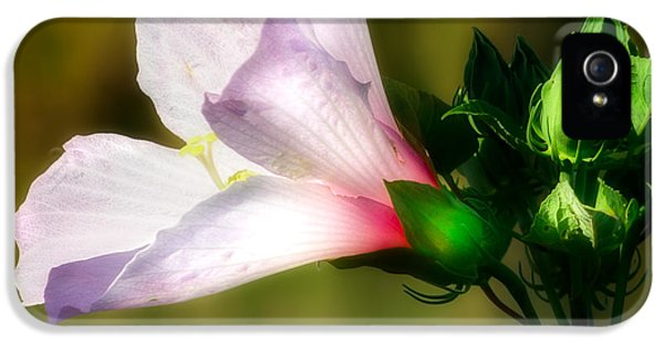 Grasshopper And Flower IPhone 5 / 5s Case by Mark Andrew Thomas