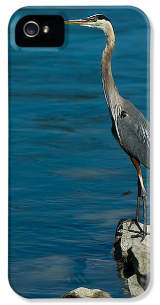 Fishing iPhone 5 Cases - Great Blue Heron iPhone 5 Case by Sebastian Musial