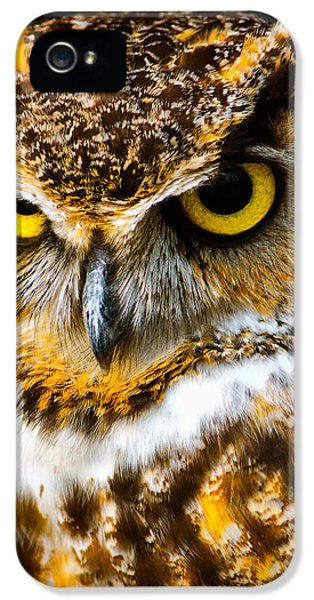 Bird Watcher iPhone 5 Cases - Great Horned Owl  iPhone 5 Case by Parker Cunningham