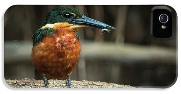 Green And Rufous Kingfisher IPhone 5 / 5s Case by Pete Oxford
