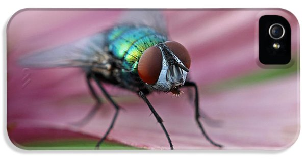 Fly iPhone 5 Cases - Green Bottle Fly iPhone 5 Case by Juergen Roth