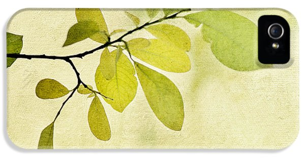 Foliage iPhone 5 Cases - Green Foliage Series iPhone 5 Case by Priska Wettstein