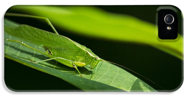 Green Katydid IPhone 5 / 5s Case by Christina Rollo
