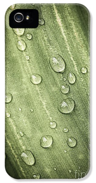 Dewdrop iPhone 5 Cases - Green leaf with raindrops iPhone 5 Case by Elena Elisseeva