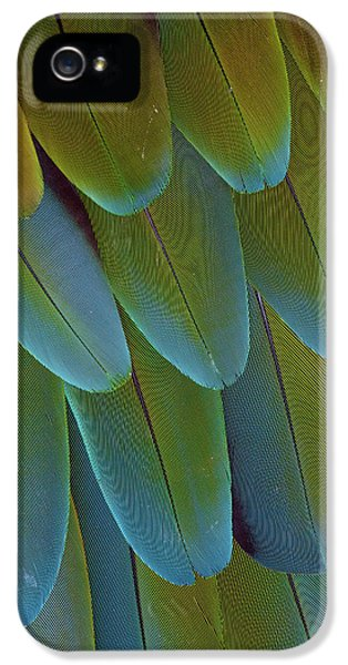Green-winged Macaw Wing Feathers IPhone 5 / 5s Case by Darrell Gulin