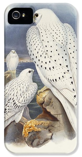 Greenland Falcon IPhone 5 / 5s Case by John Gould
