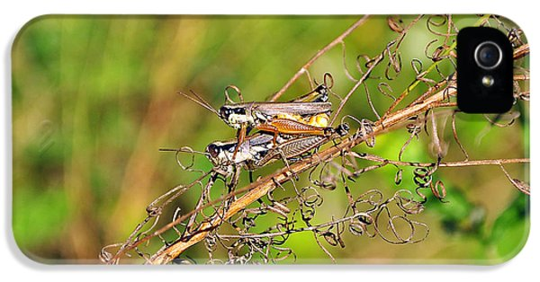 Gregarious Grasshoppers IPhone 5 / 5s Case by Al Powell Photography USA