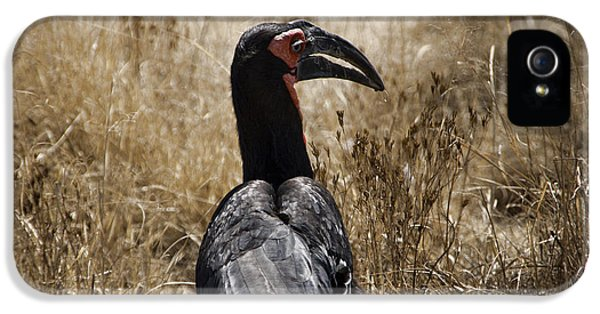 Ground Hornbill-africa IPhone 5 / 5s Case by Douglas Barnard